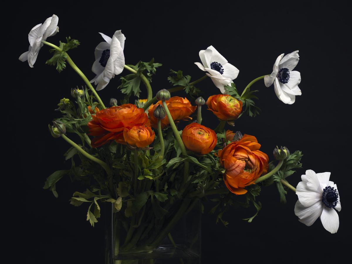 La Vie des Fleurs